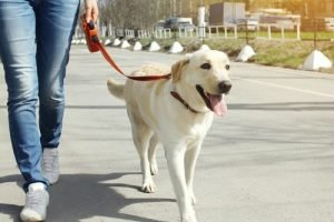 walking with dog to lose weight