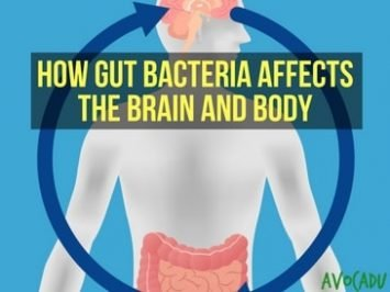 How Gut Bacteria Affects the Brain and the Body